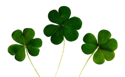 Shamrock, Luck of the Irish